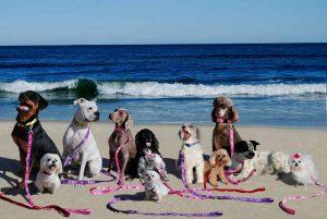 LBI Dogs - Sara Caruso