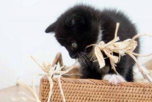 Playful Kitten - Marjorie Amon