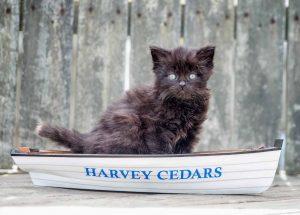 Harvey Cedars - Marjorie Amon
