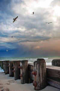 Storm - Tonya Wilhelm